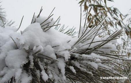 大雪节气的由来 大雪节气习俗都有哪些?