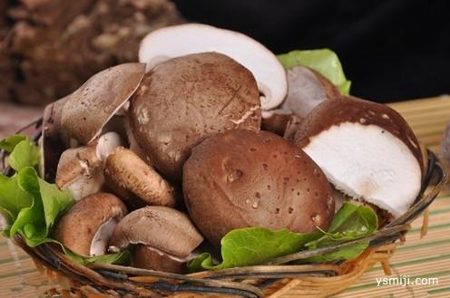 """香菇身上的""""臭味""""来自哪里"""