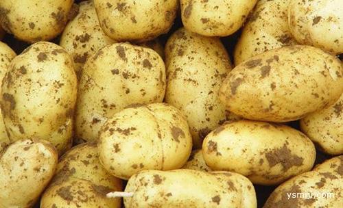 吃土豆不能放此物,吃了就是没病找病